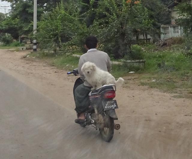 Bike with Dog2.jpg