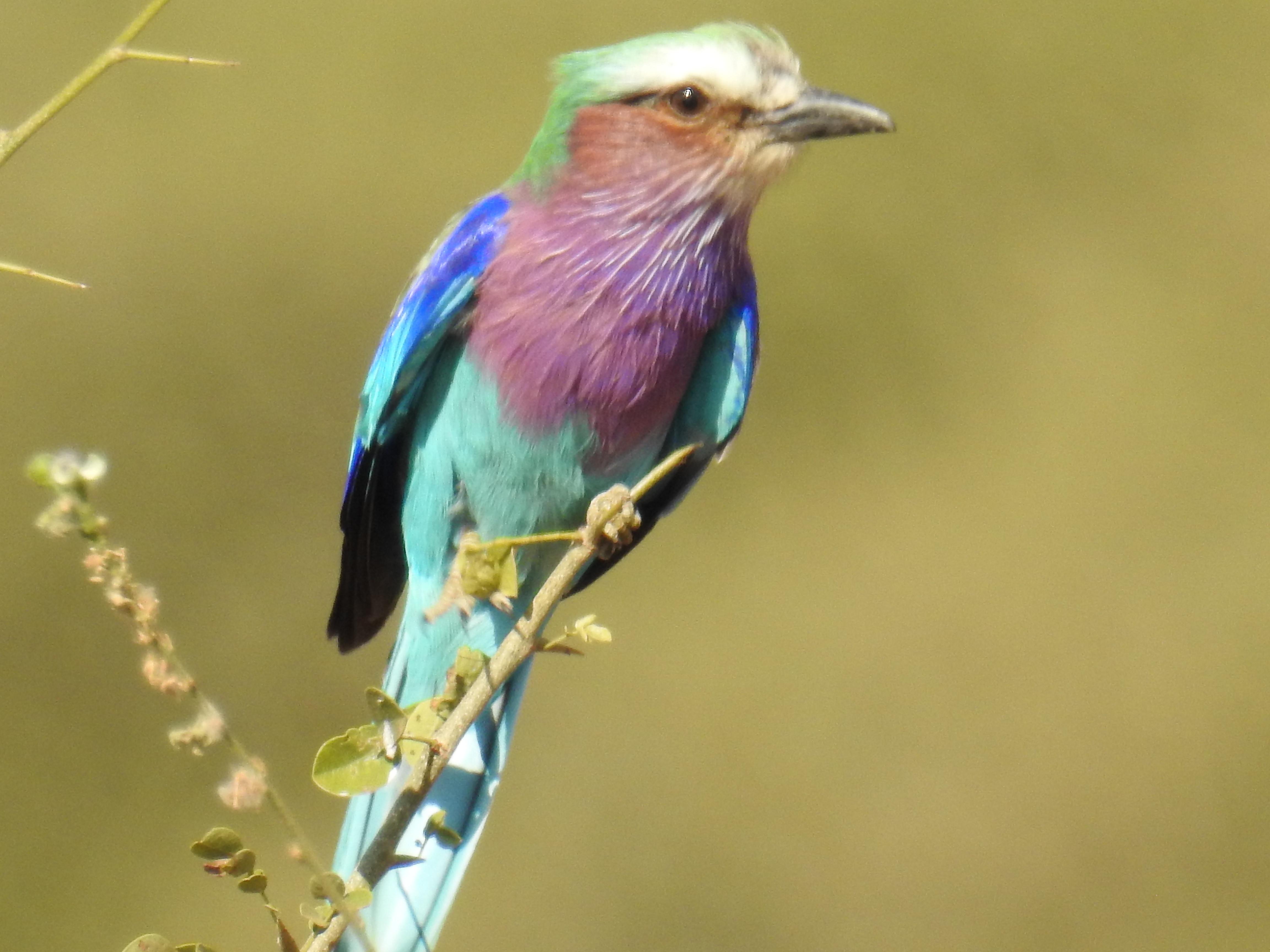 Bird_Multicolor.jpg
