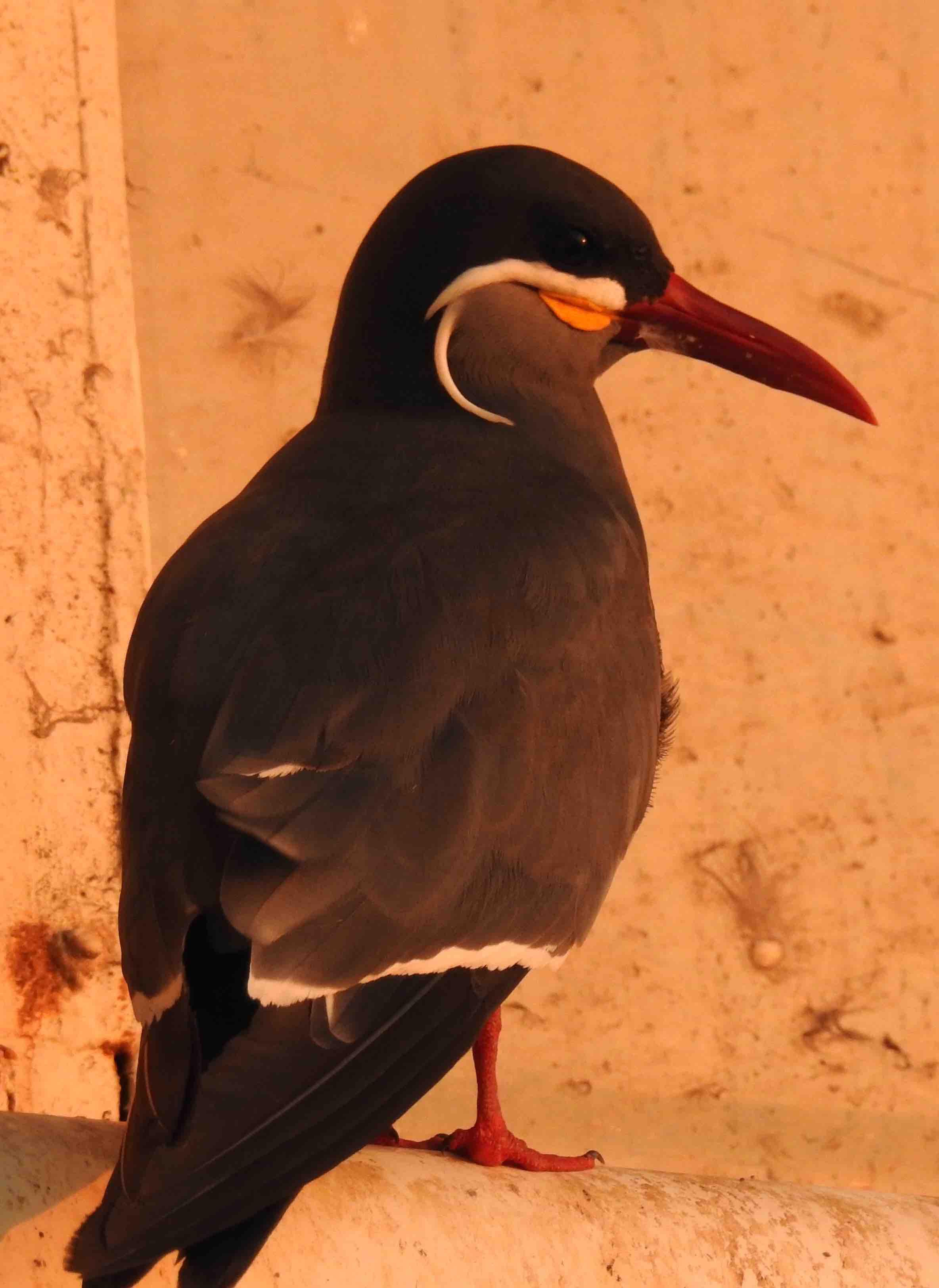 Cool bird.jpg