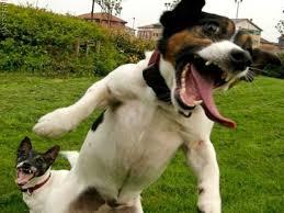 Crazy dog.jpg