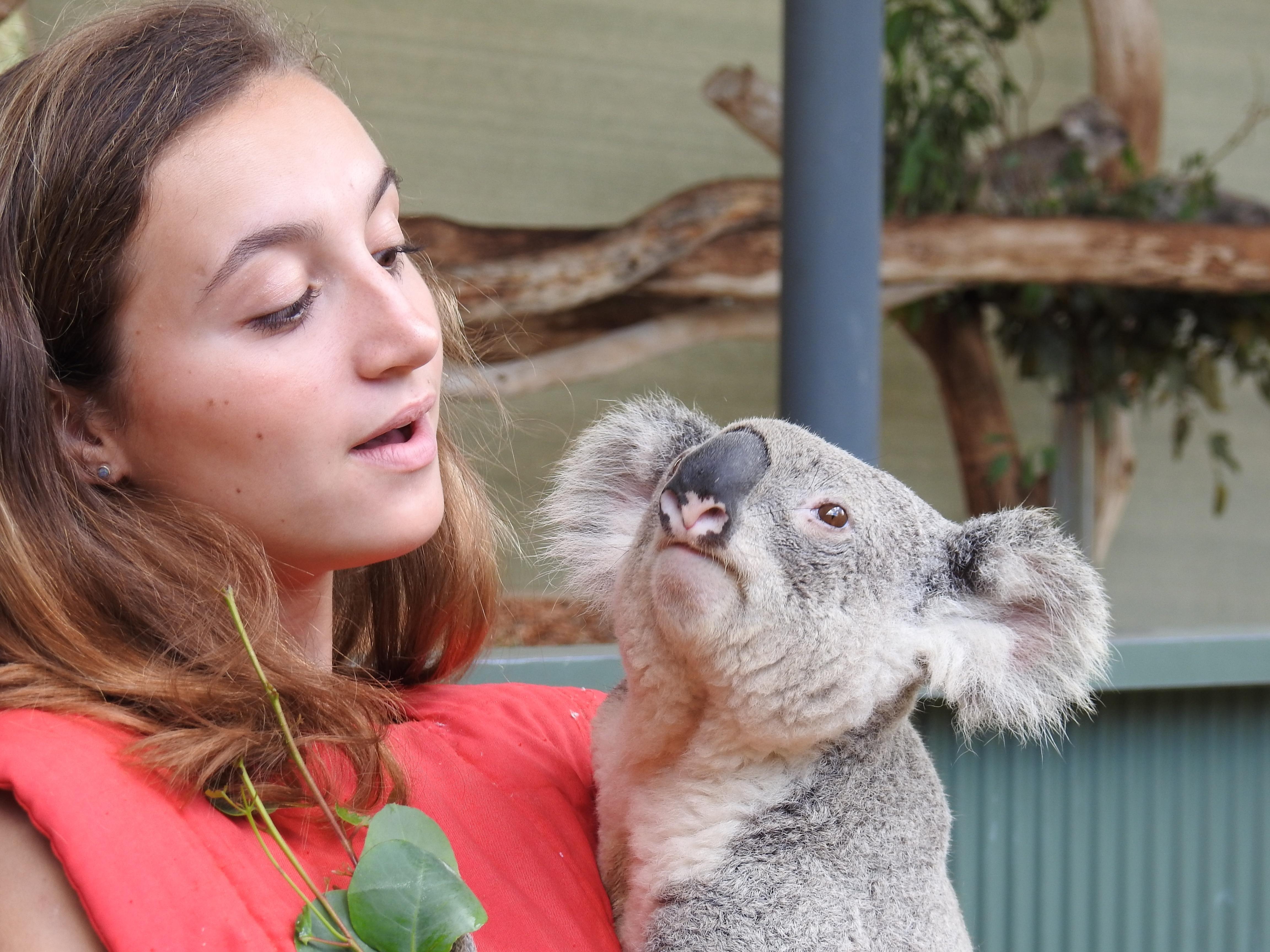 Cute V and Koala.jpg