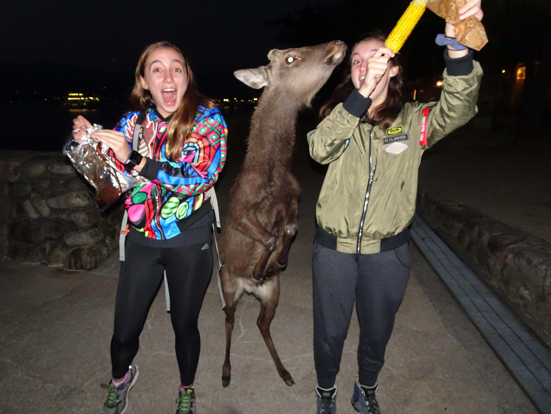 Deer and girls3.jpg