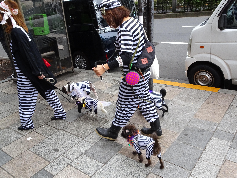 Doggie jail break.jpg