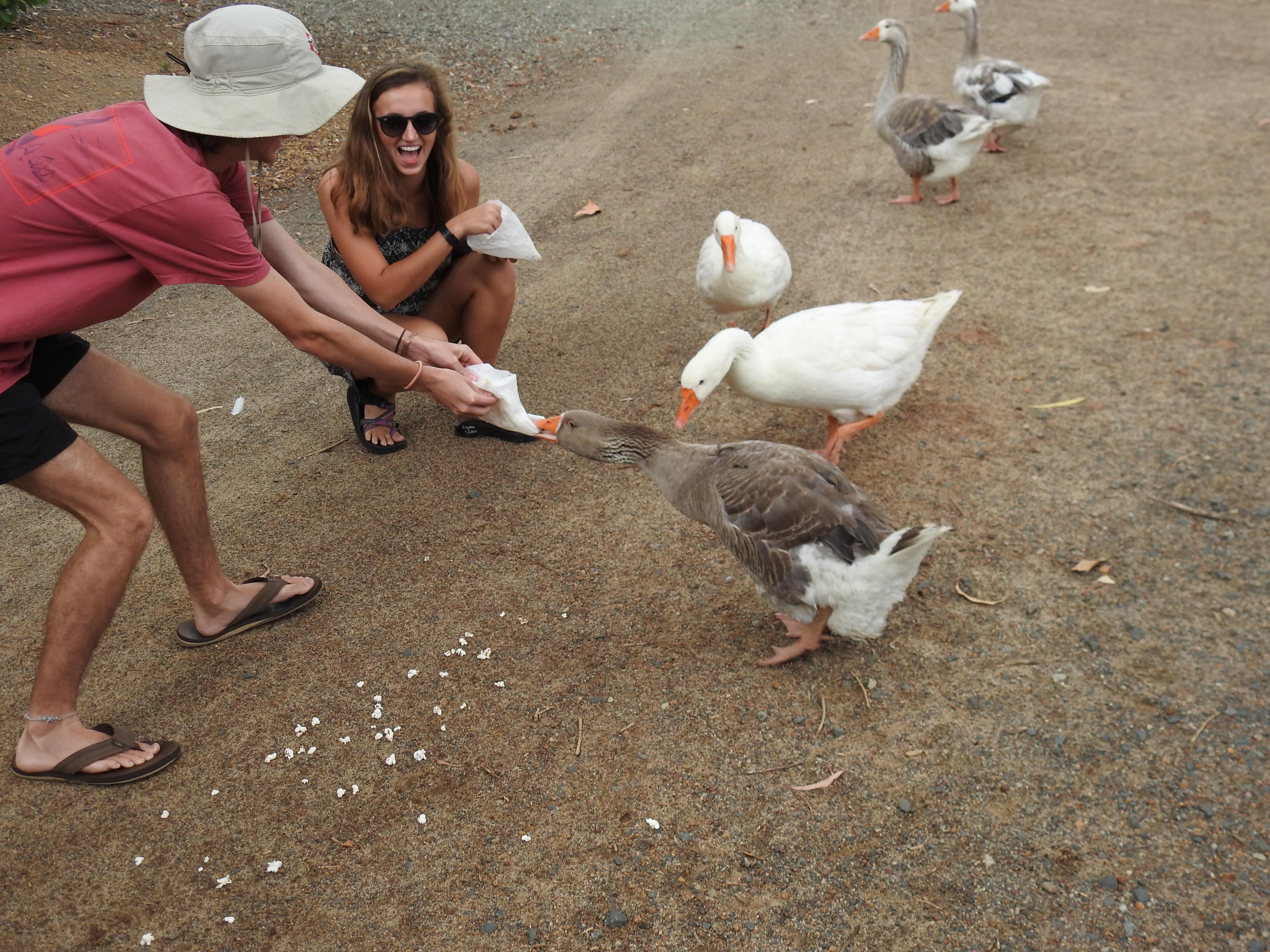Duck steals food 2.jpg