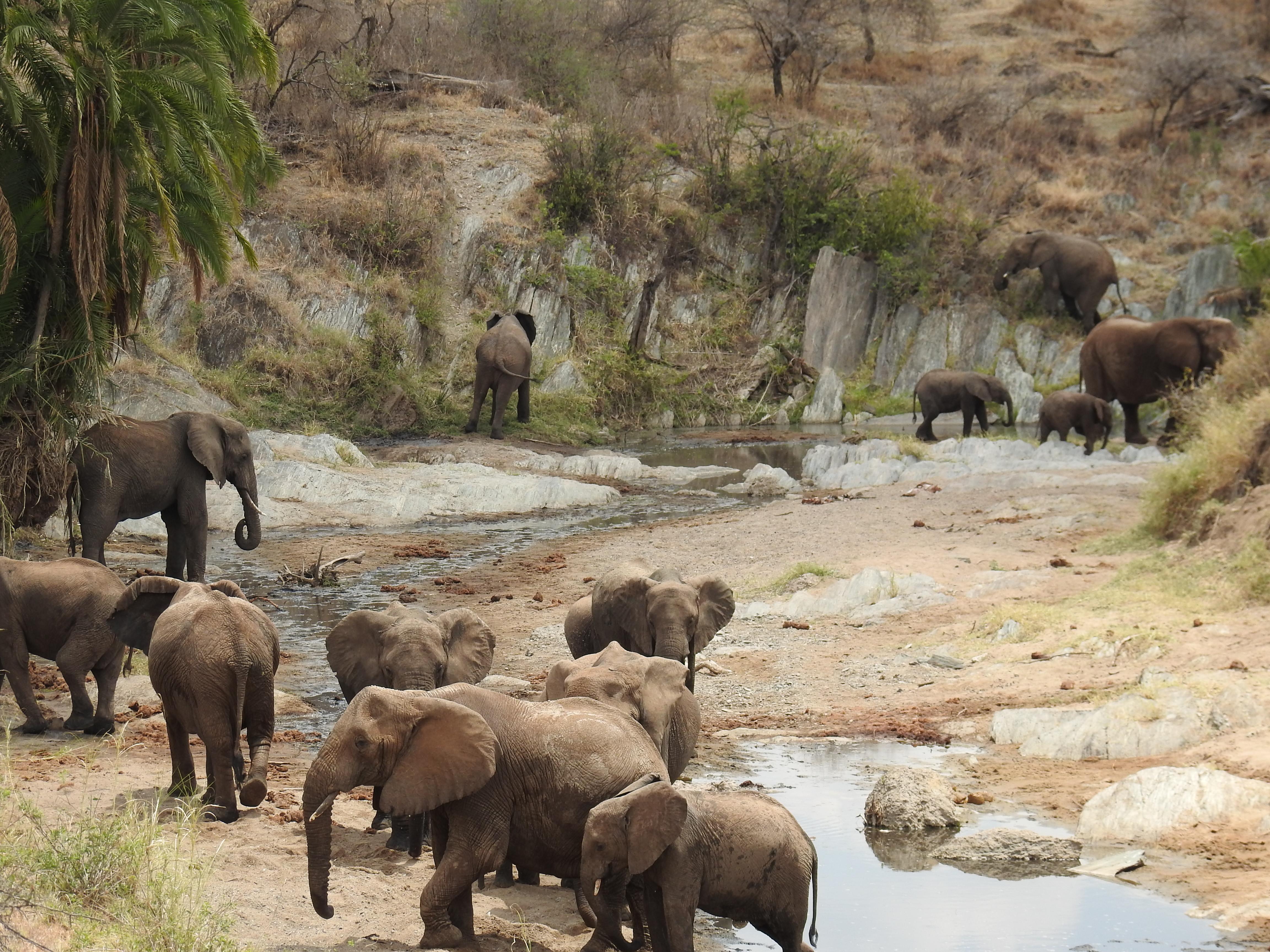 Elephants_in_gorge.jpg