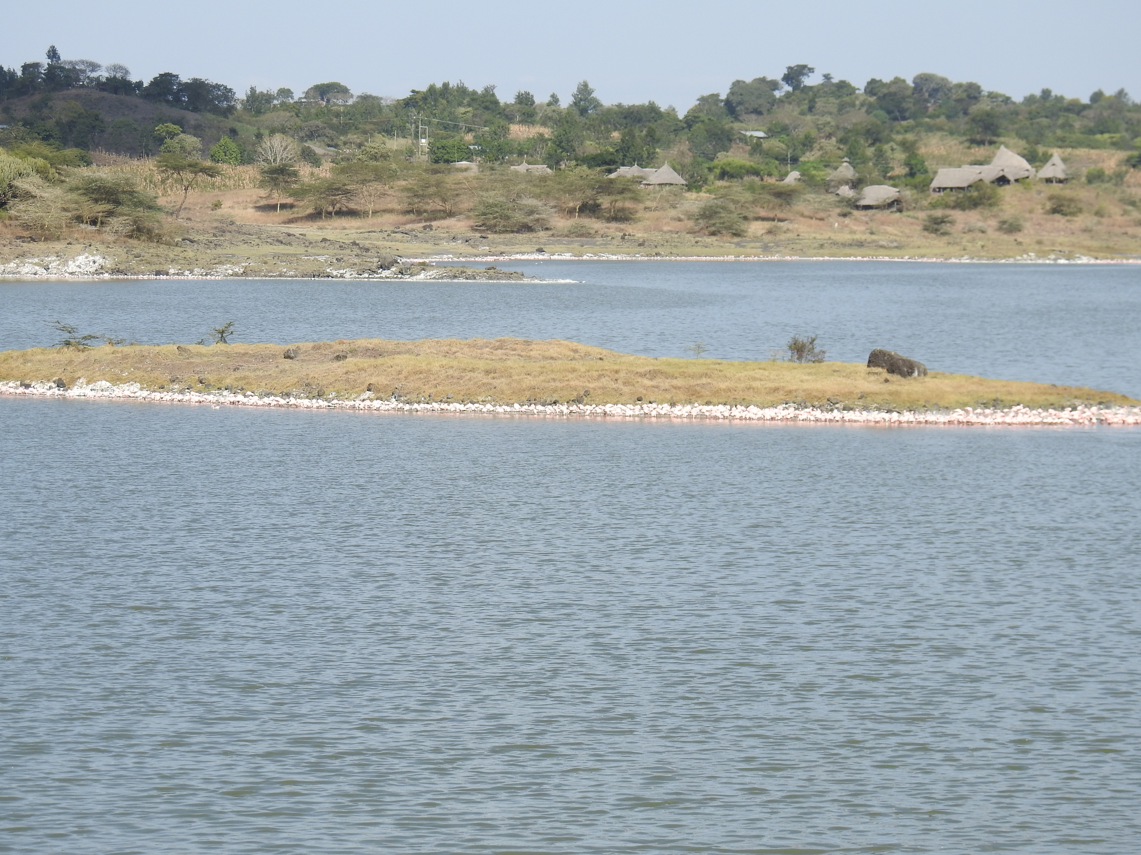 Flamingo_island.jpg