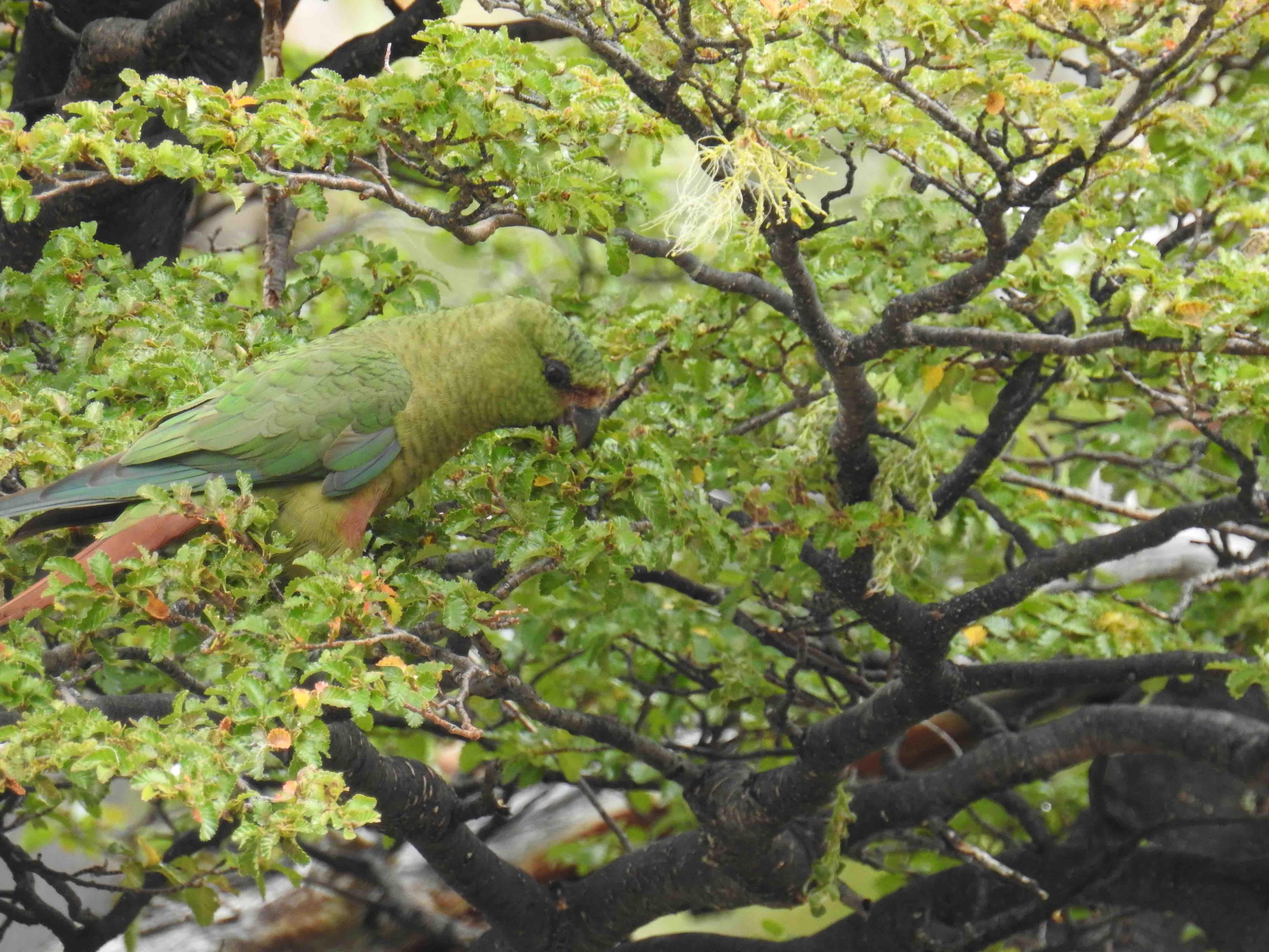 Good Parrot.jpg