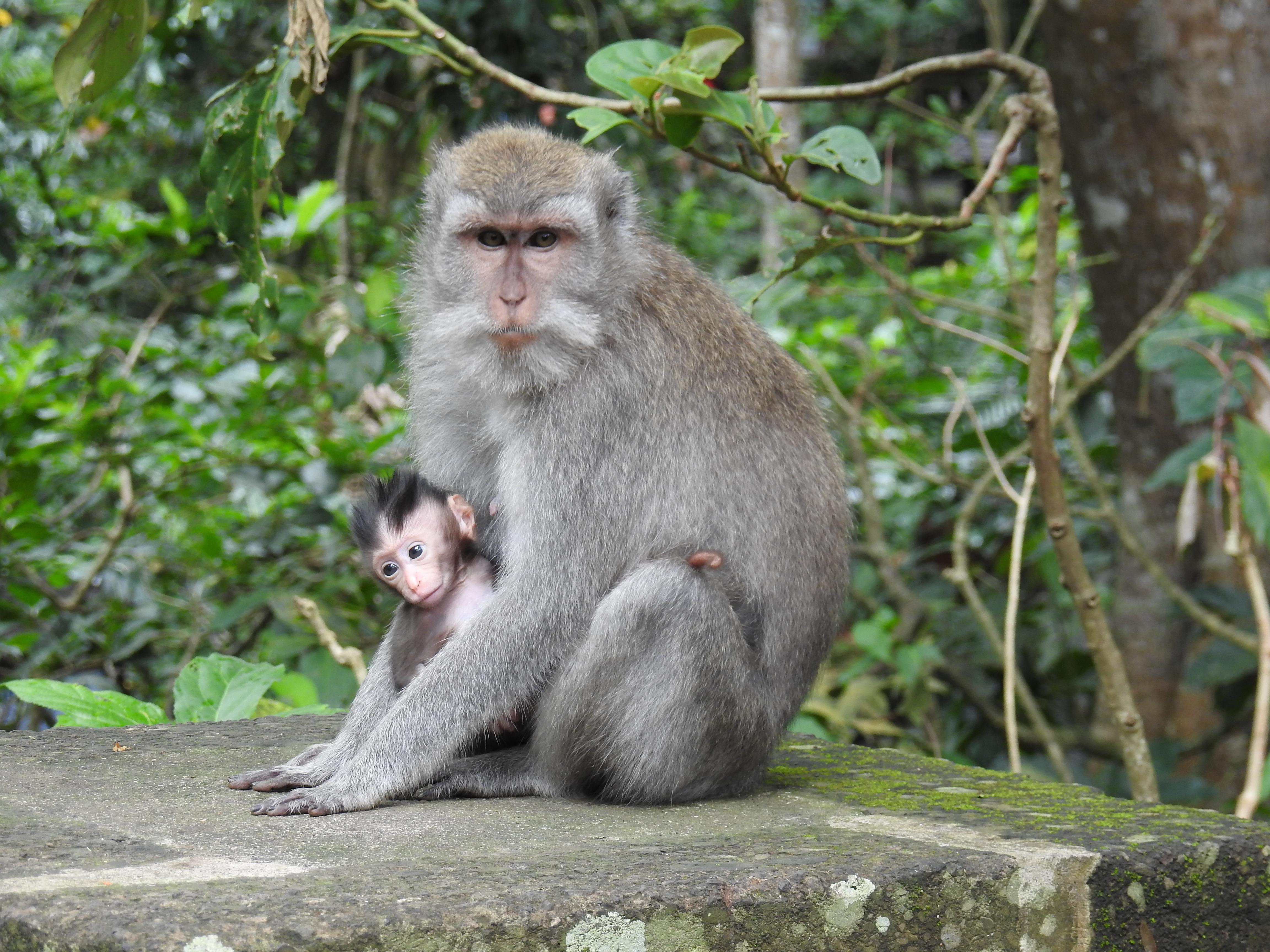 Monkey and baby5JPG.jpg