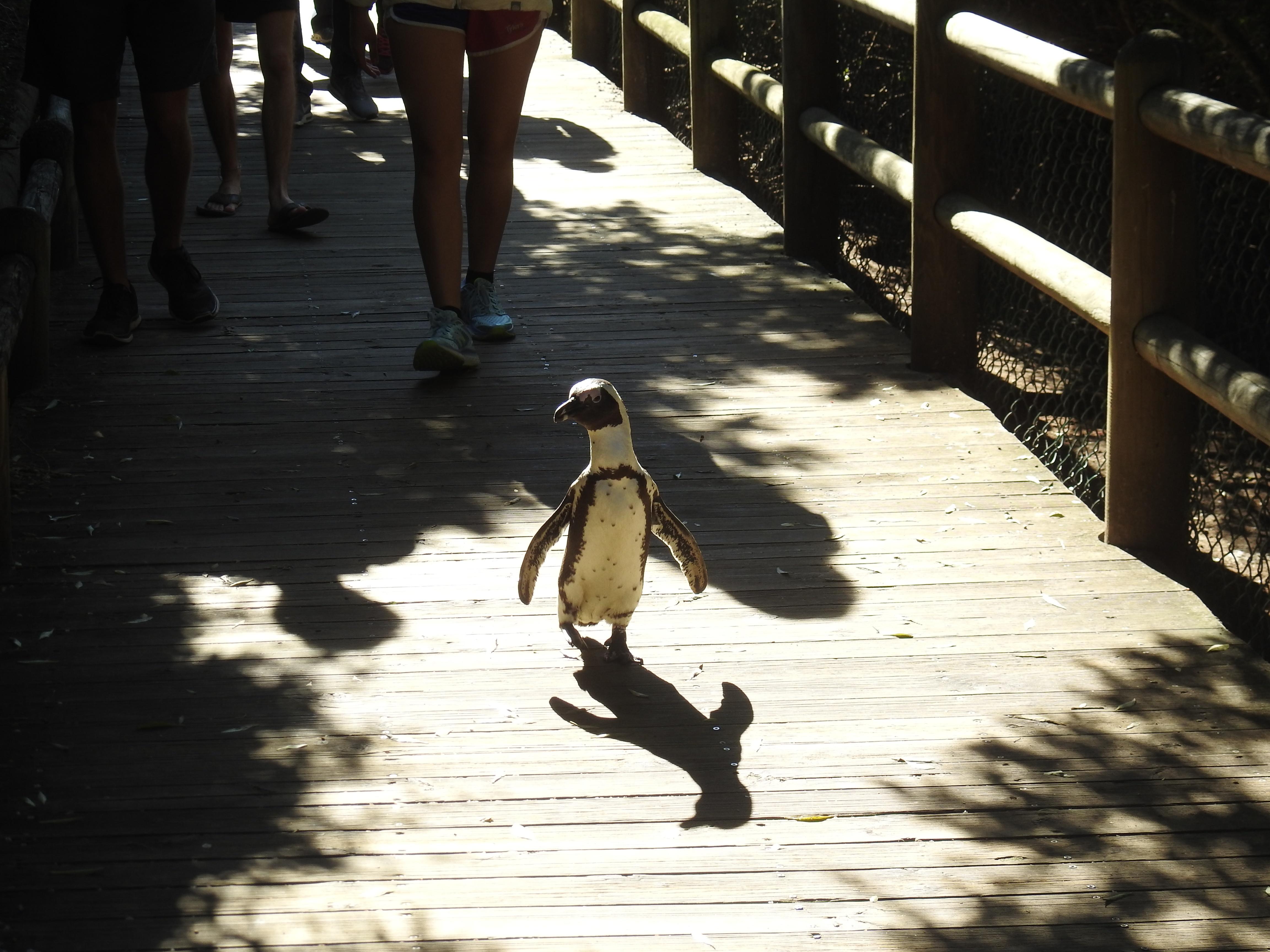 Penguin_Escape_2.jpg