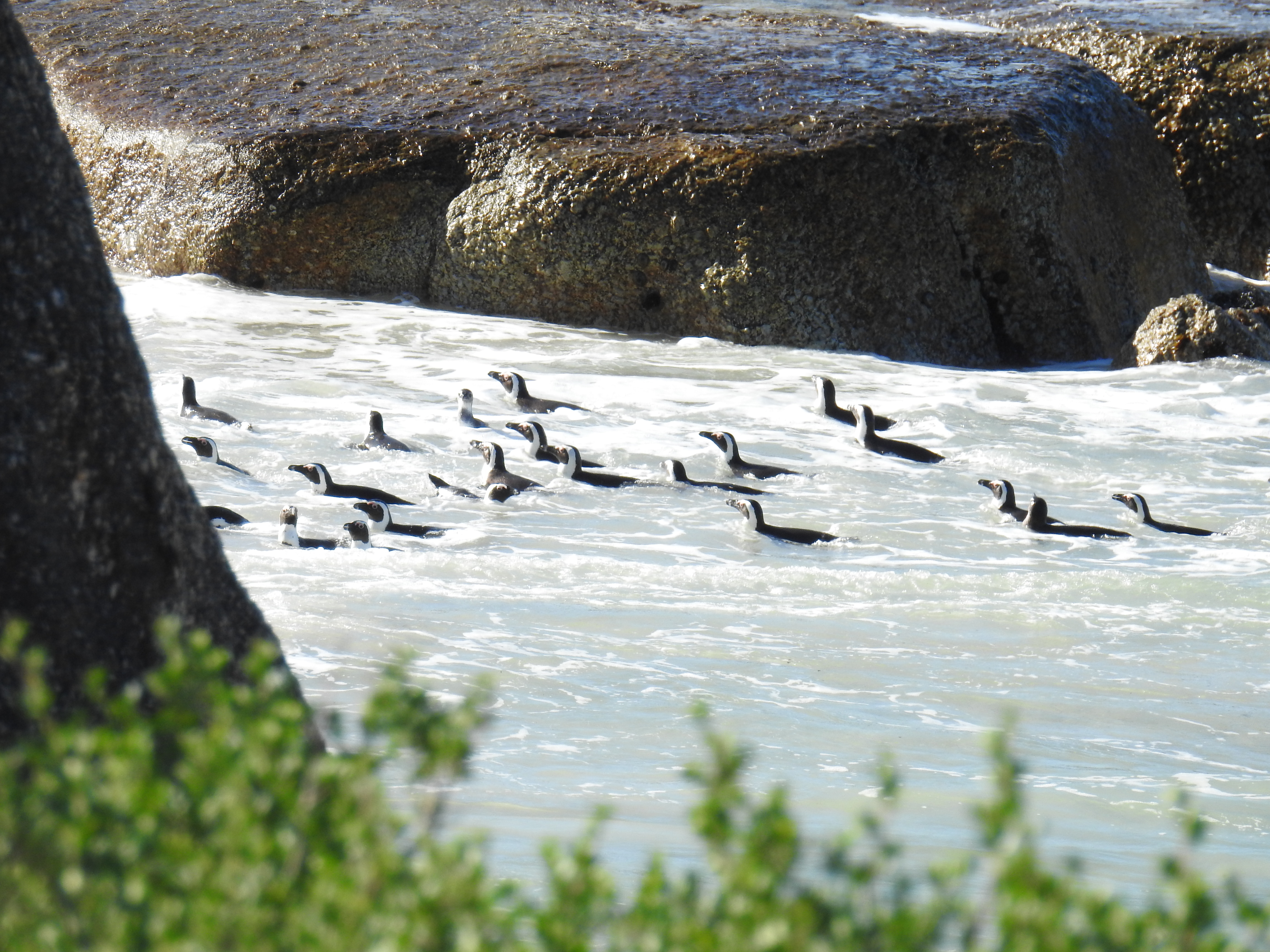 Penguin_Raft.jpg