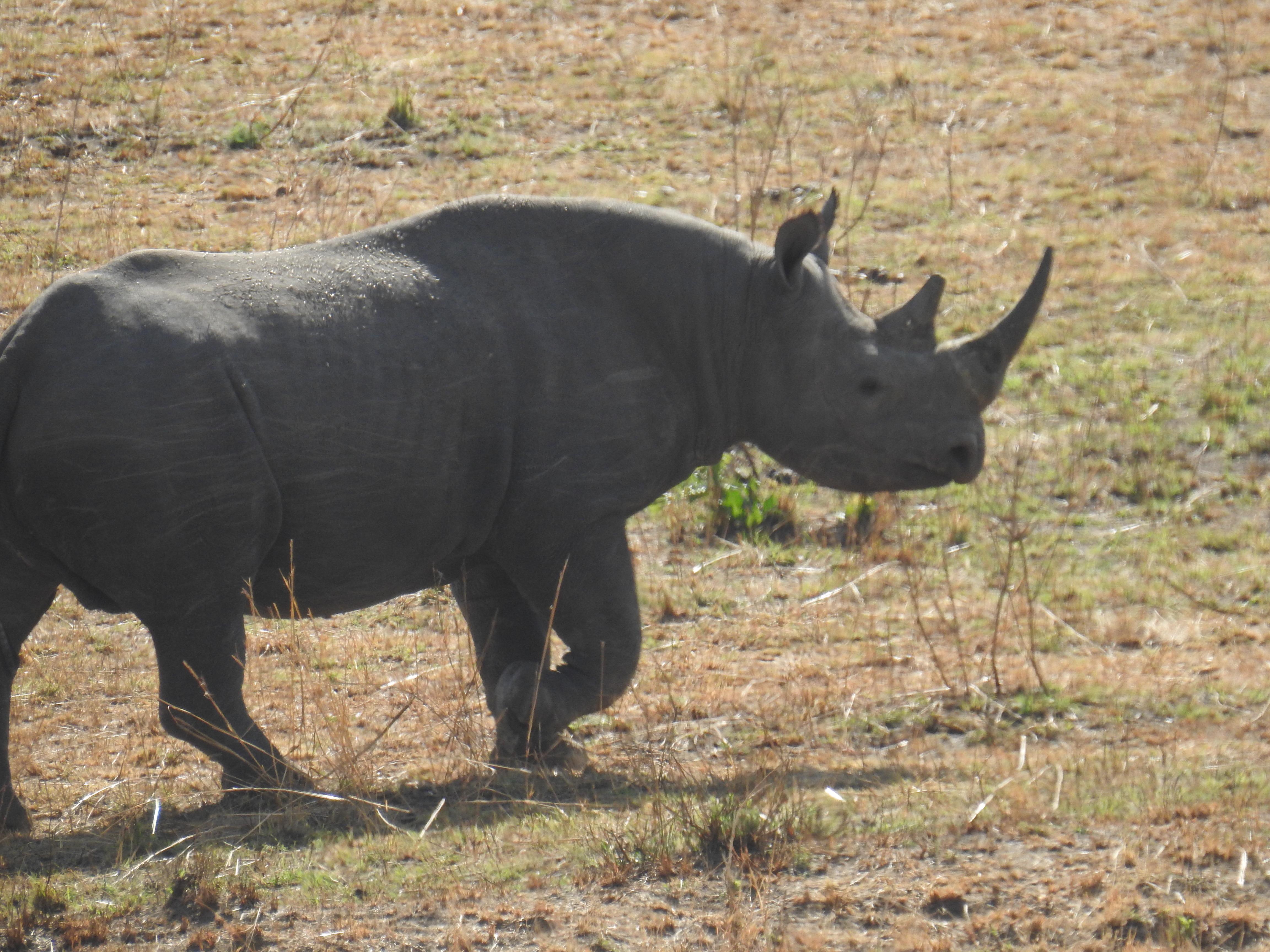 Rhino_1.jpg