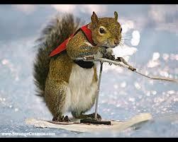 Skiing Squirrel.jpg