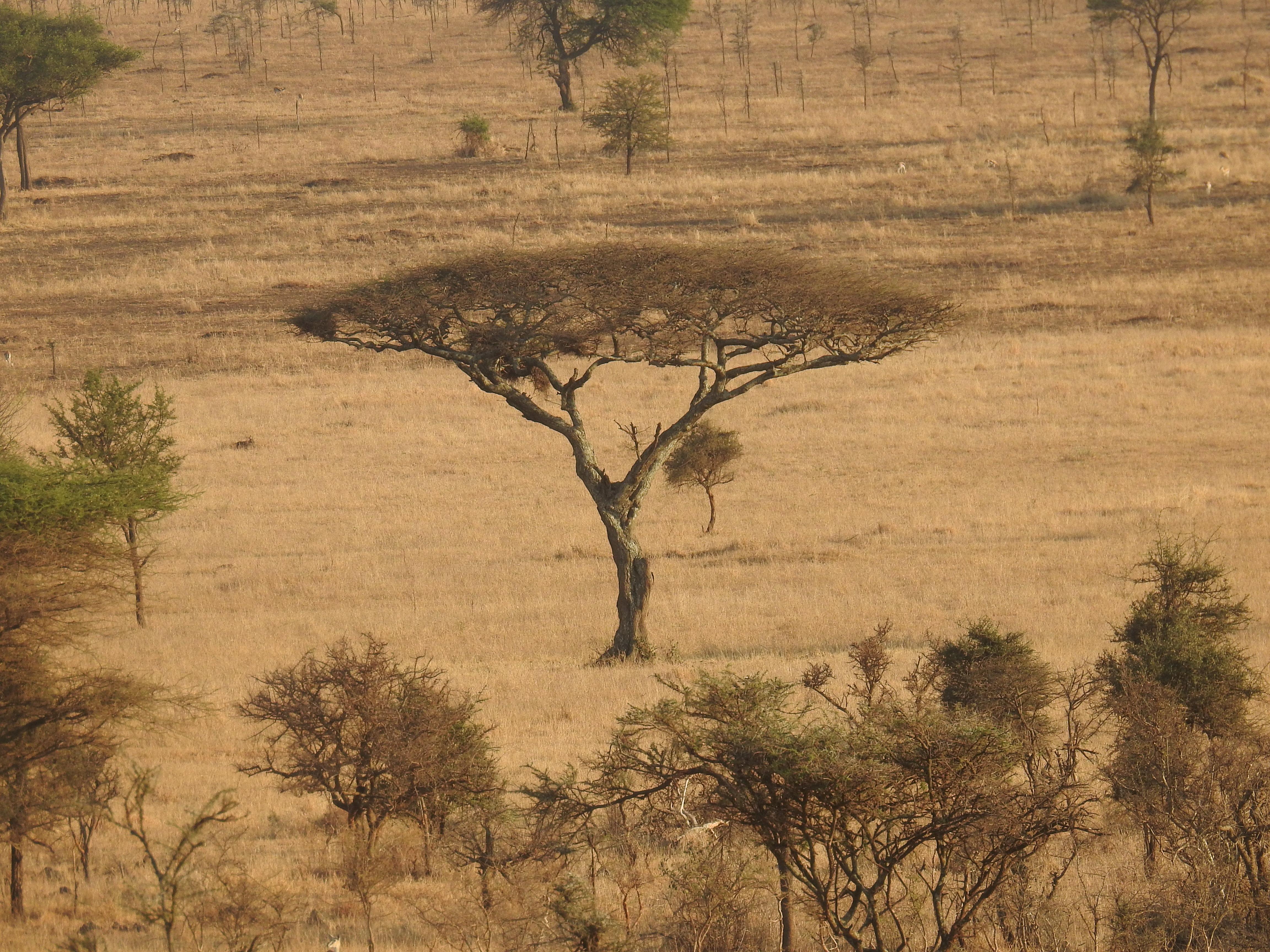 Tree_from_air.jpg