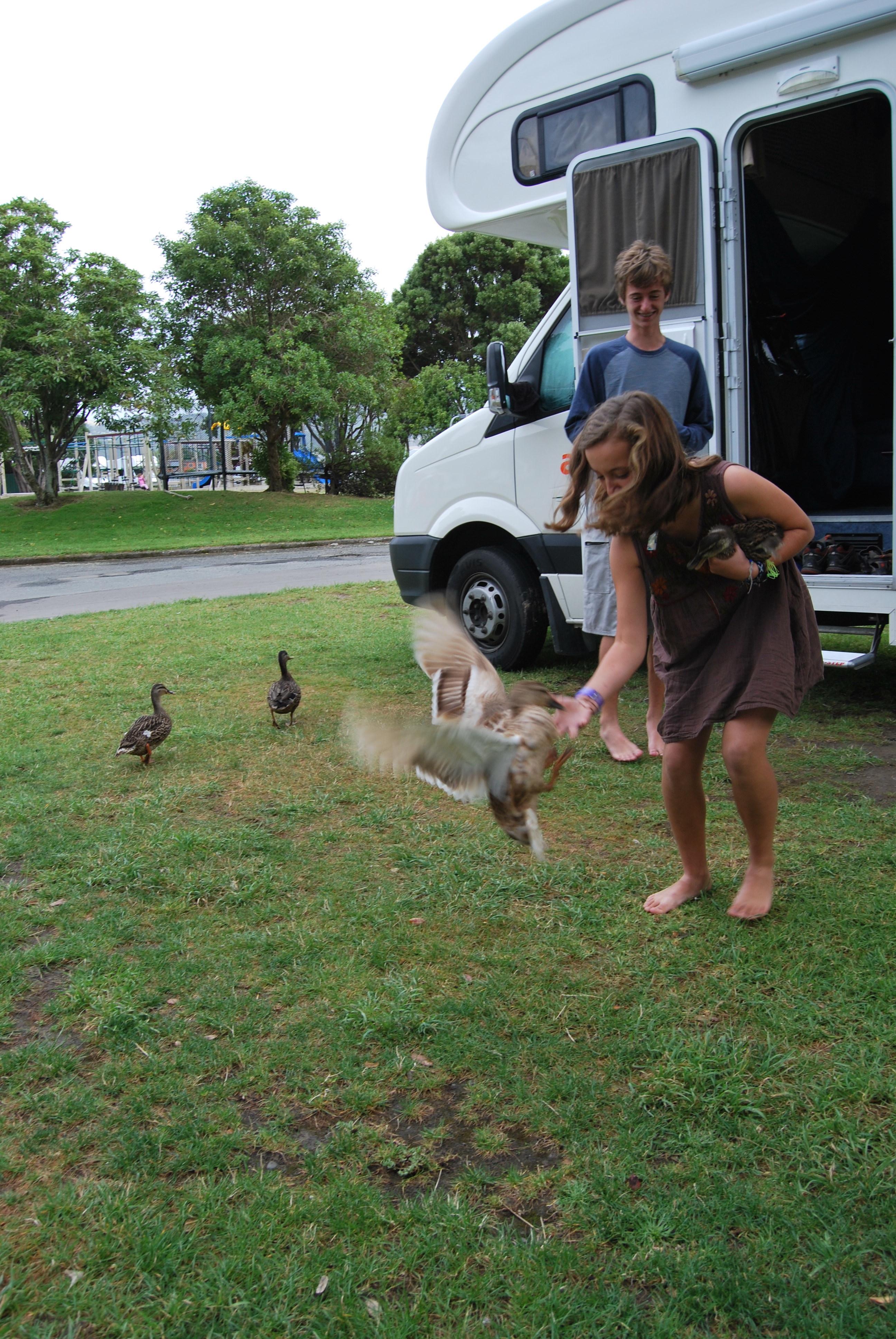 Virginia_duck_Wellington.jpg